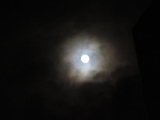Photos: 闇夜にぽっかりと