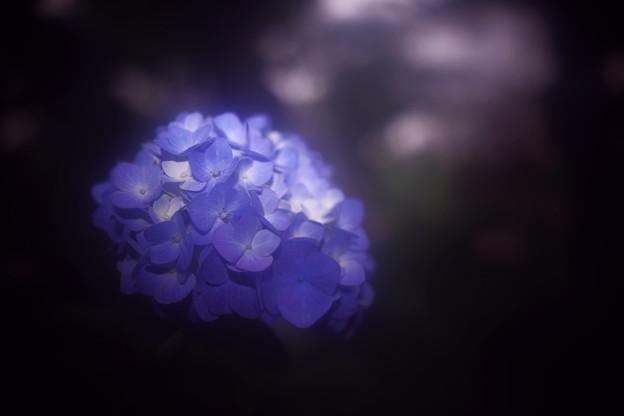 陰日向に咲く