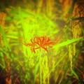 Photos: 天穂に咲く姫