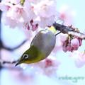 Photos: 早春-2