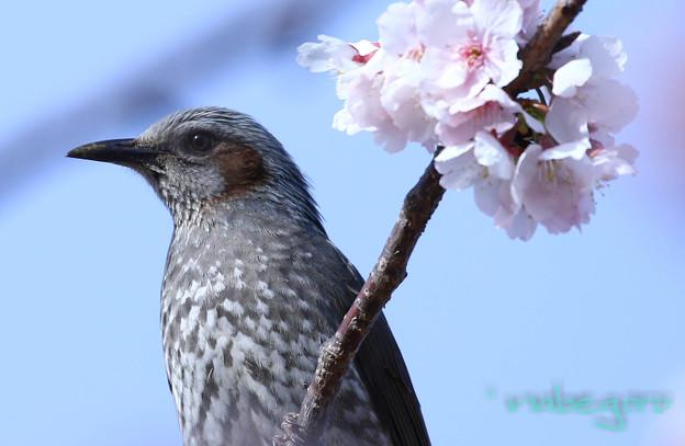 Photos: 早春賦