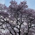 Photos: 高遠城址公園