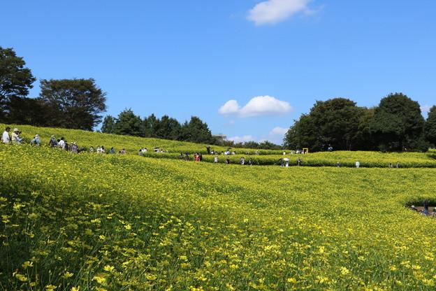 400万本の花畑