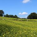 Photos: 400万本の花畑