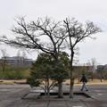 大石神社・赤穂城跡の写真0120