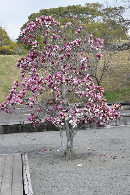 大石神社・赤穂城跡の写真0140