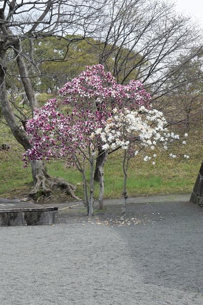 大石神社・赤穂城跡の写真0141