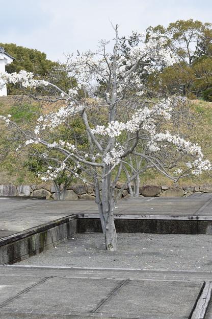 大石神社・赤穂城跡の写真0142