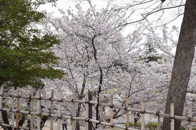 姫路城の写真0392