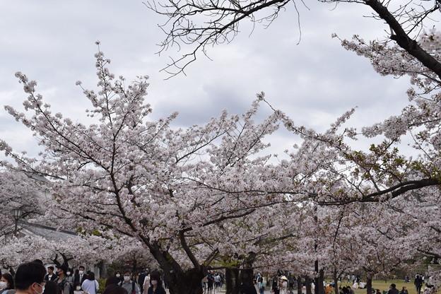 姫路城の写真0393