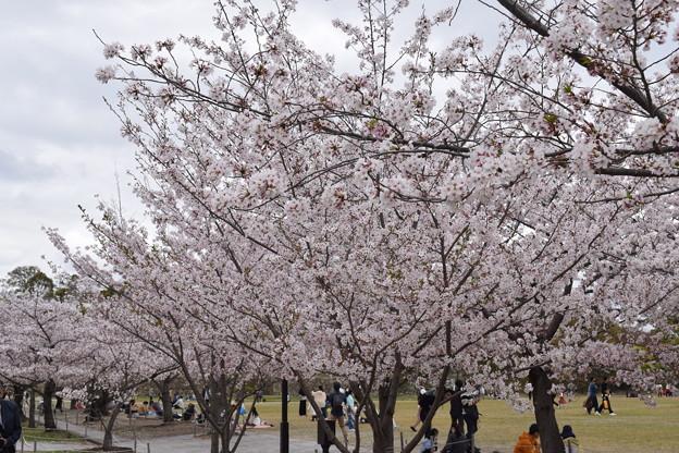 姫路城の写真0395