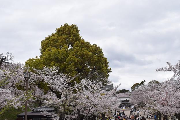 姫路城の写真0397