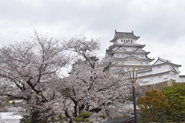 姫路城の写真0398
