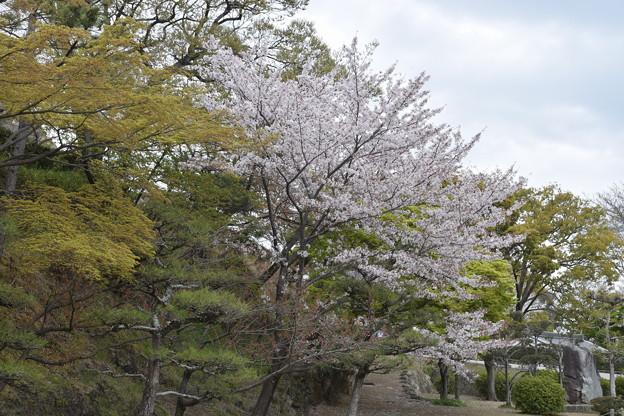 姫路城の写真0405