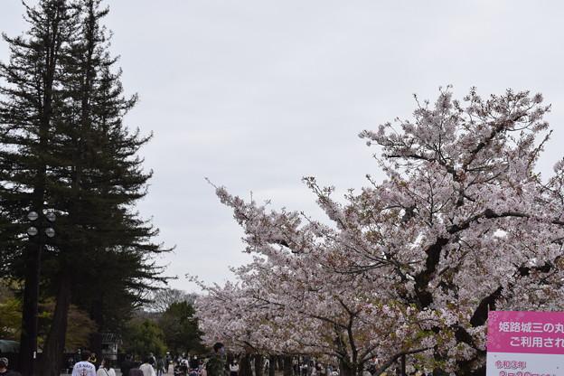 姫路城の写真0407