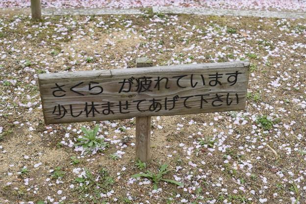 姫路城の写真0408
