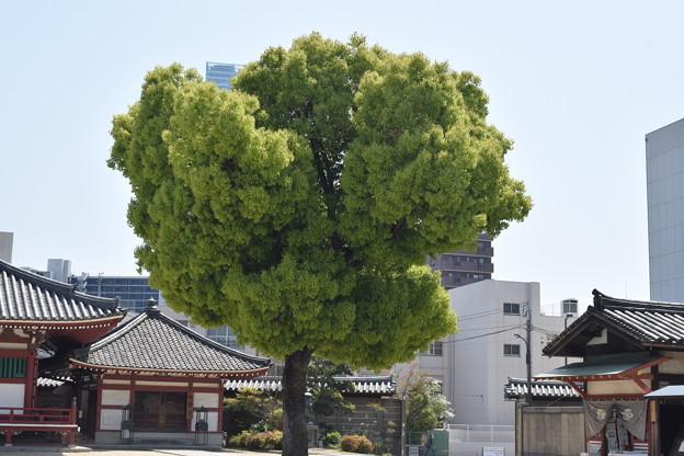 四天王寺の写真0015