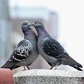 Photos: 愛の姿、鳩編