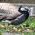Photos: あなたも羽毛布団の巣ですか・・?