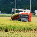 Photos: *稲刈り*