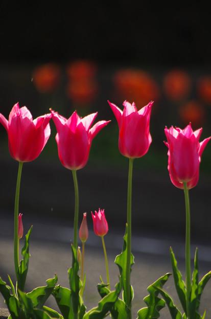 西陽の当たる花壇 #01