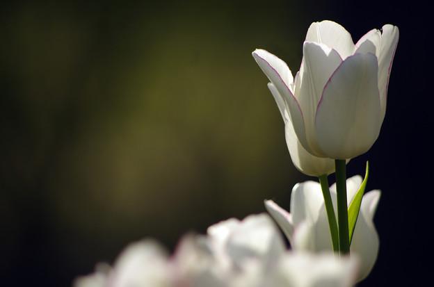 西陽の当たる花壇 #02