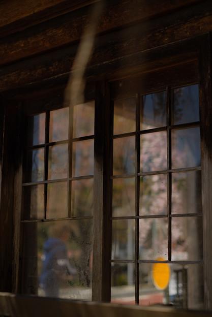 人里(へんぼり)のしだれ桜_窓越しの桜-2308
