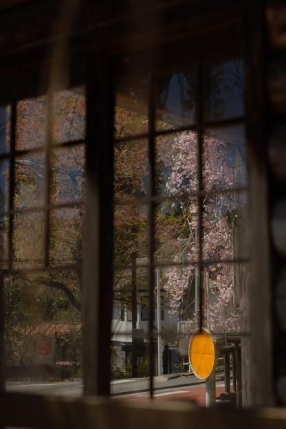 人里(へんぼり)のしだれ桜_窓越しの桜-2309