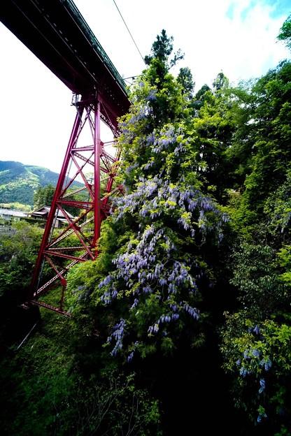 Photos: 鉄橋と藤-2197