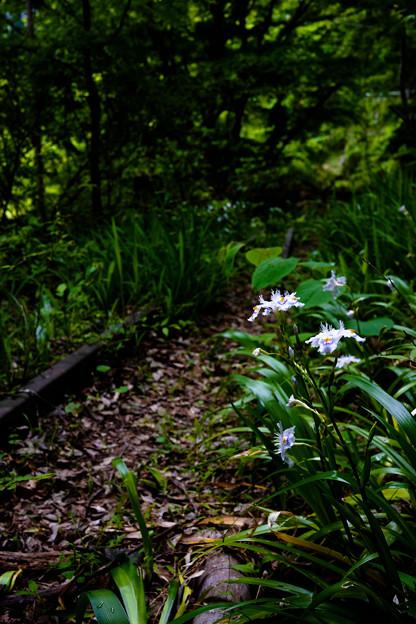 廃線の花-2234