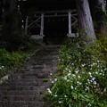 Photos: 奥多摩_むかし道_羽黒三田神社-2240