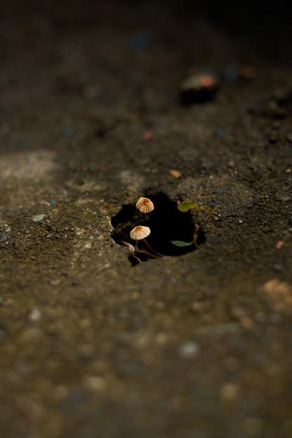 44鳩ノ巣渓谷_穴からきのこ-2436