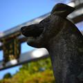 三峰神社_おおかみと鳥居-2418