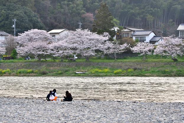 山口県岩国市の錦帯橋へ。。河川敷の桜