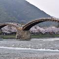 錦帯橋と川沿いの桜。。