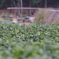 枝豆ノビタキ0925 (3)