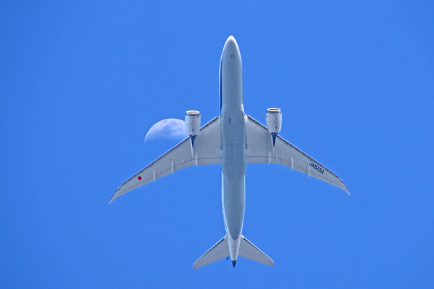 JA829A  全日空 Boeing 787-8 Dreamliner