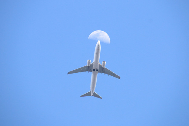 Photos: JA329J 日本航空  Boeing 737-846
