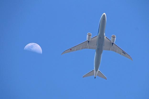 JA818A 全日空 Boeing 787-8 Dreamliner