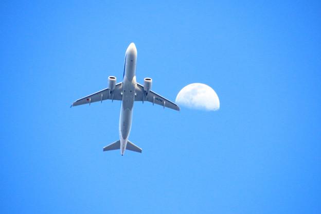 JA219A 全日空 Airbus A320-271N