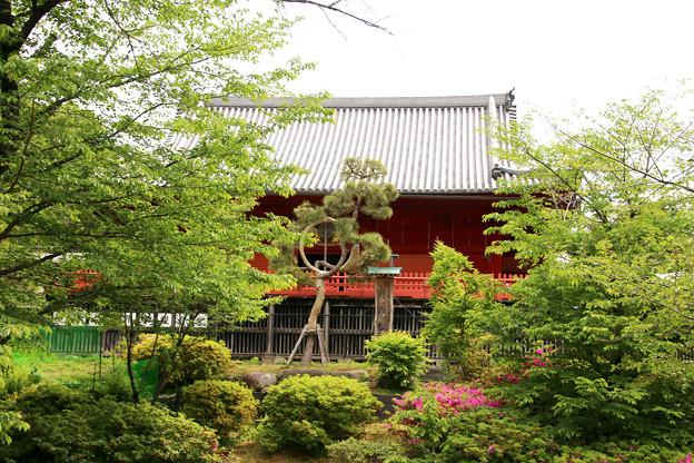 緑の「清水観音堂と月の松」