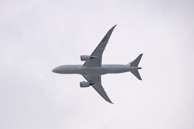 JA846J 日本航空 Boeing 787-8 Dreamliner