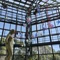 冬のフラワーセンターと「KUMAIDEN Design Project」18