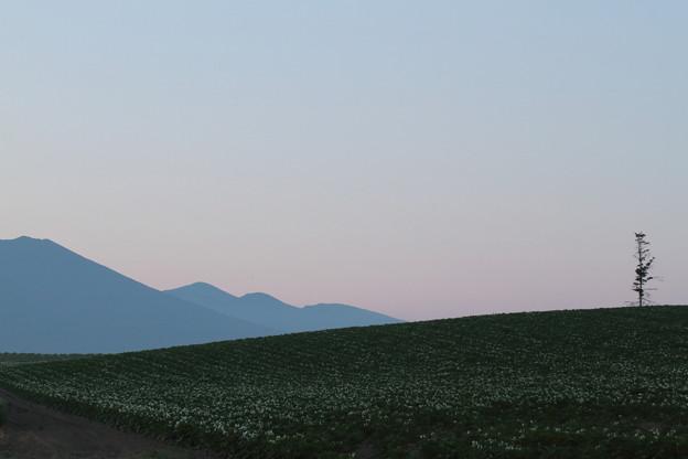 IMG_7870 黎明
