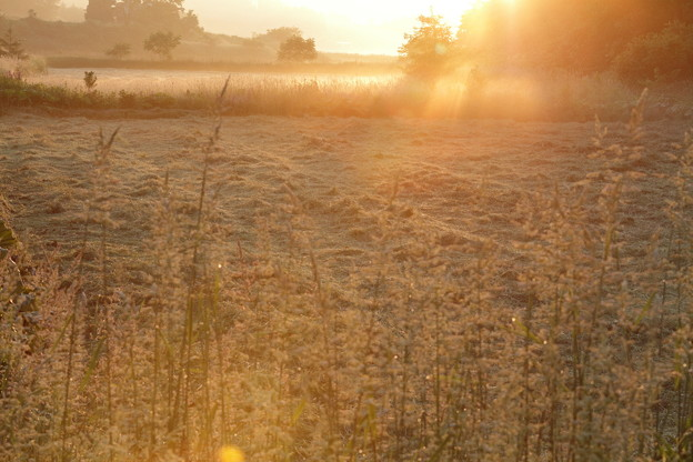 IMG_7892 朝霧の世界