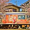 Photos: 桜が終わる前に・・・ラブライブサンシャイン