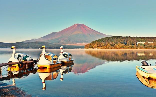 スワンの湖 ~初秋~
