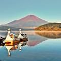 Photos: スワンの湖 ~初秋~