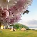 八重桜が咲くキャンプ場