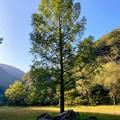 園内のシンボルツリー